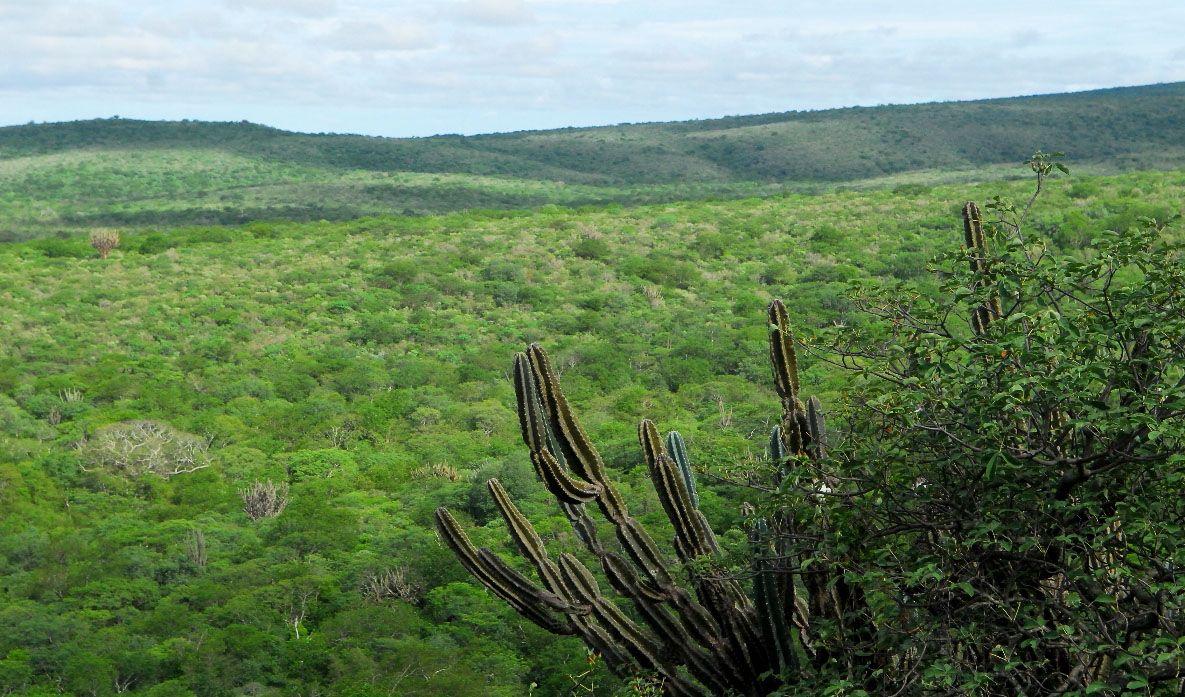 Estudio revela que en el Cerro León existe una gran mina de diamantes