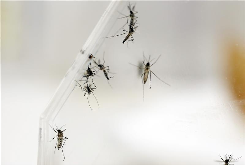 ab99d6eef Puerto Rico confirma 19 casos de zika y llama a la precaución de las ...
