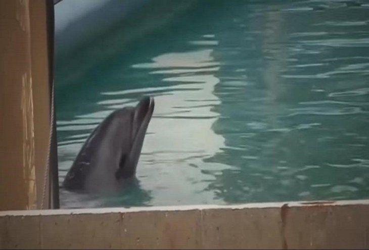 Delfín y 46 pingüinos están abandonados en acuario de Japón