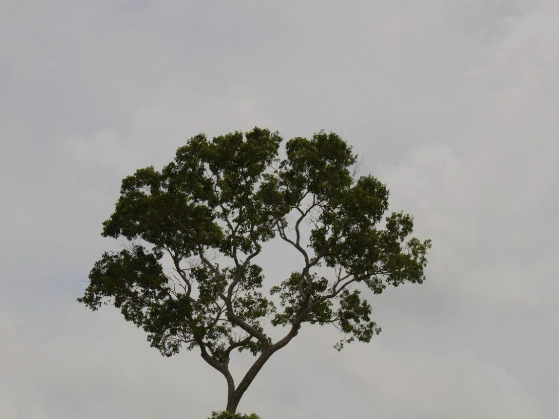Martes cálido y con lluvias, anuncia Meteorología