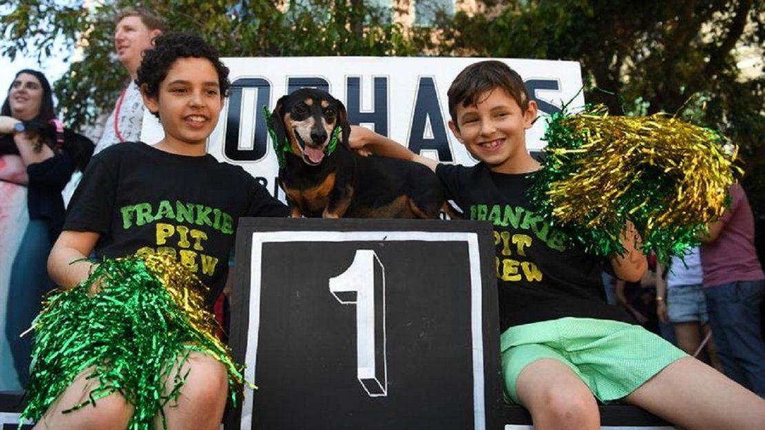 Una adorable carrera de perros salchicha en Australia