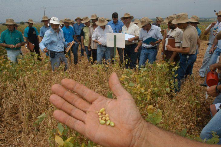 Los productores anuncian que el impuesto a la soja perjudicará al sector.
