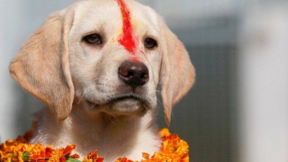 Nepal celebra el día de adoración a los perros