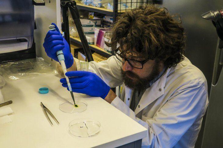 El científico chileno Tomás Egaña enseña una muestra de microalgas utilizadas crear la pielfotosintética.