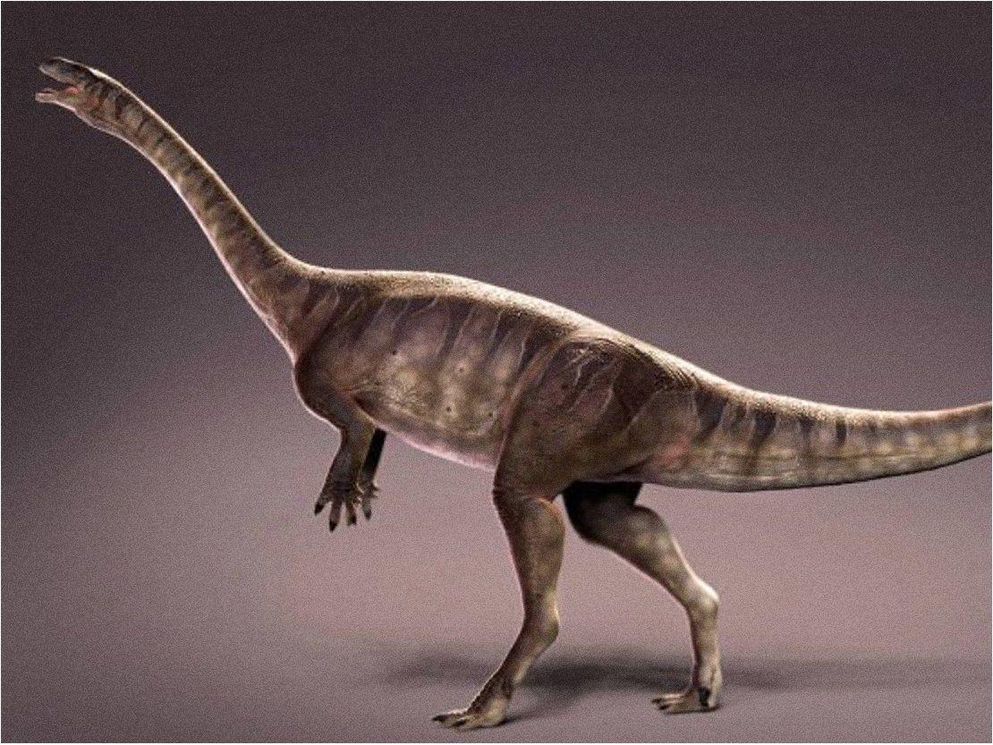 Descubren en Brasil el dinosaurio de cuello largo más antiguo del mundo | Mundo Animal ...