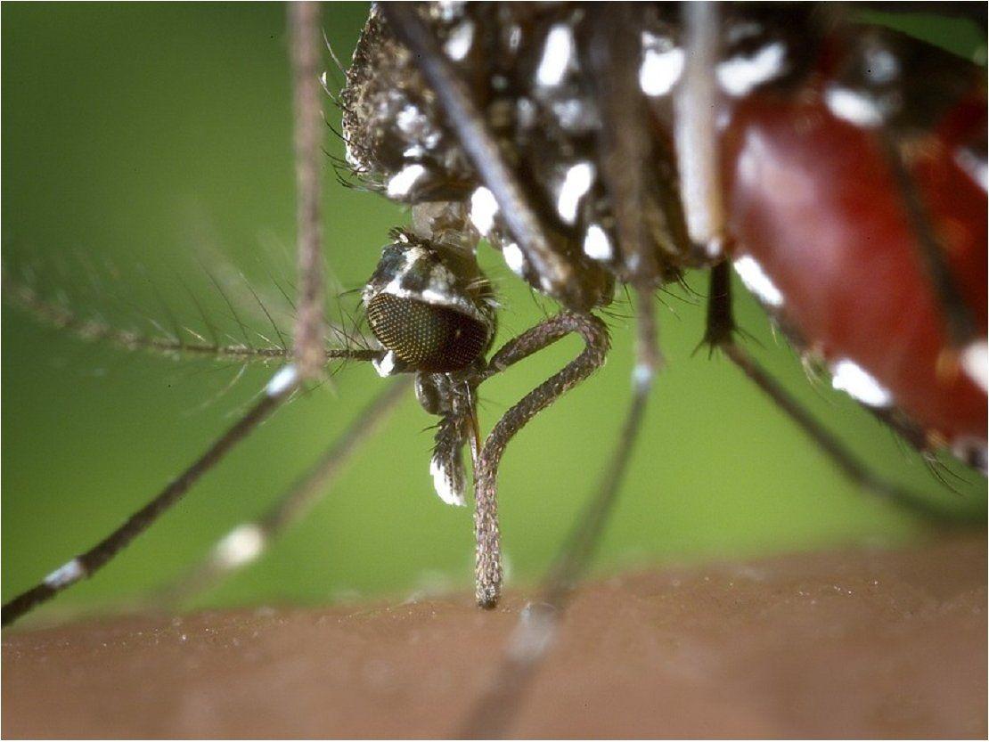Suman 1.675 los casos de personas infectadas por dengue en Paraguay