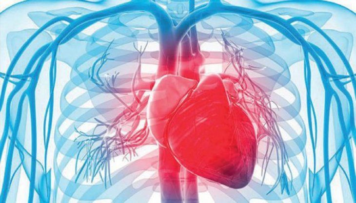El reloj inmune descubierto dicta cuándo  estas células deben ser activadas y cuándo eliminadas de la  circulación sanguínea.