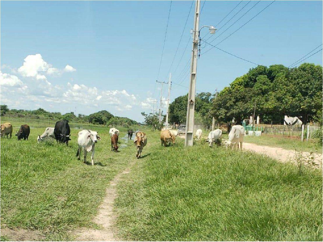 Quejas de animales sueltos, pese a prohibición municipal en Carmelo Peralta