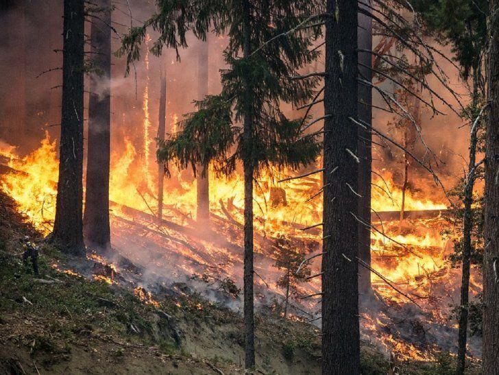 Fotografía ilustrativa de un incendio forestal.