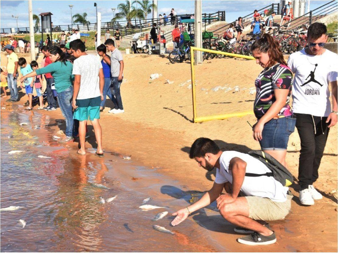 Mortandad de peces: Descartan relación con agrotóxicos derramados en Brasil