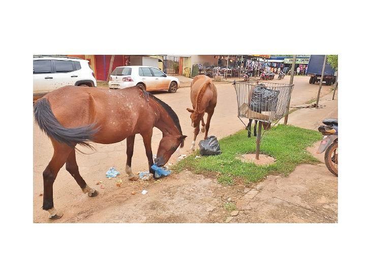 Letra muerta. La ordenanza que prohíbe la tenencia de animales sueltos no se cumple.