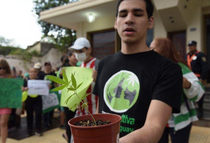 mamá-cultiva-regalará-1-000-plantines-de-cannabis-en-serenata-a-las-madres