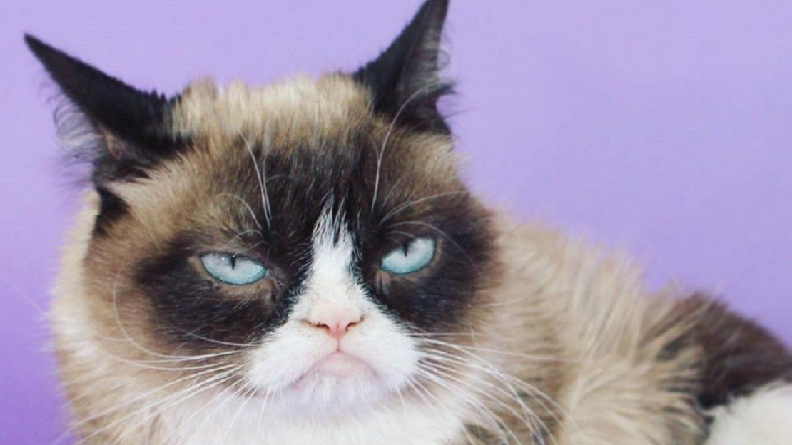 Murió Grumpy Cat, la icónica cara del malhumor