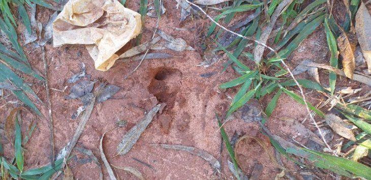 En el lugar se hallaron varios rastros que dejó el atacante de las ovejas.