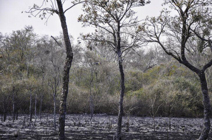 Resultado de imagen para Se reportan más de 20 áreas de incendios forestales en Paraguay