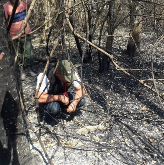 El incendio afectó fuertemente a la fauna y flora de la zona del Pantanal.