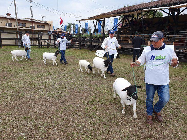 La Expo Norte se realiza cada año durante los primeros 10 días de setiembre  en el campo de exposiciones Nanawa de la ARP