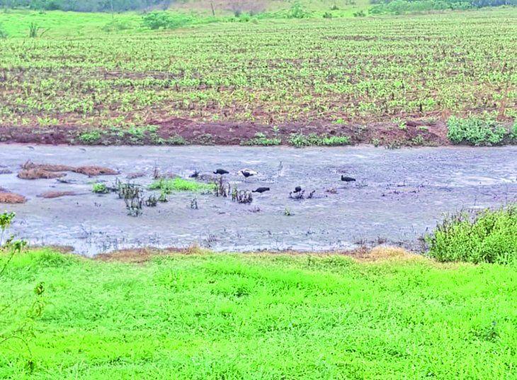 Bonanza. La lluvia llegó al campo y tranquiliza al sector agrícola para realizar la siembra.