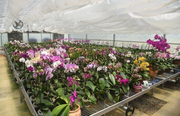 Orquídeas. Con mejores técnicas