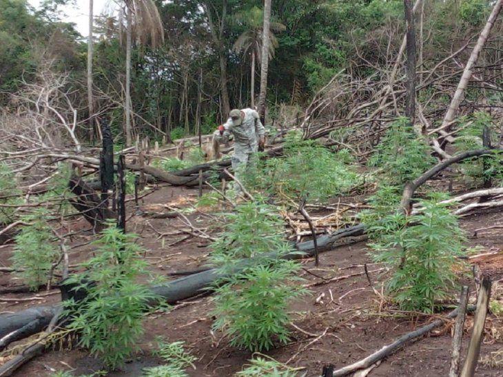 Un total de 18 toneladas de marihuana se destruyeron.