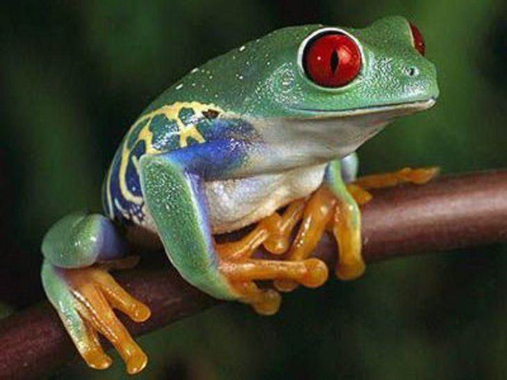 Ecuador cuenta con una gran biodiversidad para resguardar a cientos de animales en ella.