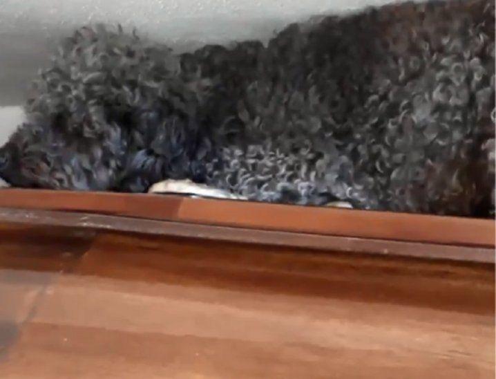 El perro visita a su dueña en el cementerio — Villaguay
