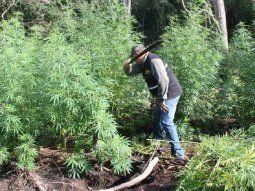 La destrucción de la marihuana estuvo a cargo de laUnidad de Inteligencia Sensible (SIU) de la Policía Nacional, la Fuerza de Tarea Conjunta (FTC) y laDirección de Comunicación del Mades.
