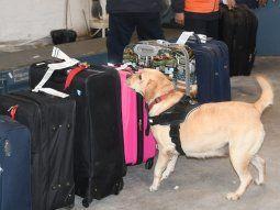Los datos surgieron con base en el envío de 23 kilos de cocaína que habrían sido introducidos por personas, luego de que las maletas hayan pasado los controles de rayos x y de los canes detectores de drogas.