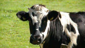 Una vaca que desapareció tras escaparse de un matadero con cerca de 40 de sus compañeras fue encontrada el jueves, pero será indultada tras la intervención de una famosa defensora, la cantautora Diane Warren.
