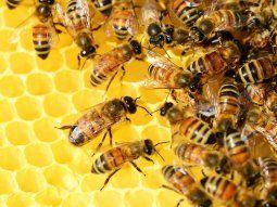 El enjambre de abejas apareció en San Patricio Misiones, alrededor de  las 11.00 de este lunes, atacó a tres personas adultas que presentan  varias picaduras.