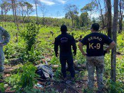 Alrededor de las 8.00 de este martes, agentes de la Secretaría Nacional  Antidrogas (Senad), de la oficina regional 1 de Pedro Juan Caballero,  allanaron la estancia Santa Lucía, de la colonia Mbarakajai.