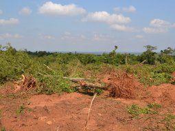 El Congreso Nacional sancionó extender por 10 años la Ley de  Deforestación Cero y el presidente Mario Abdo se comprometió a  promulgarla este jueves.