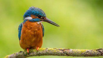 El equipo de investigación recolectó sus cifras reuniendo los datos de casi 1.000 millones de avistamientos de aves registrados en eBird, una base de datos en línea de observaciones de aves de unas 600.000 personas.