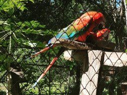 Se verificaron guacamayos rojos, azules y amarillo, un águila negra, monos aulladores y capuchinos, un coatí, una veintena de tortugas de patas rojas y un yacaré.
