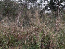 El cadáver del hombre fue encontrado en horas de la mañana, al costado de un camino vecinal, de la compañía Isla Guazú, del barrio San Blas, de la ciudad de Arroyos y Esteros.