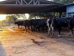 El estudio señala que Paraguay deforesta 734 hectáreas por cada 1.000 toneladas de carne vacuna exportada, mientras que Brasil, el principal exportador mundial del  rubro, desmonta 80 hectáreas/1.000 ton. de carne.