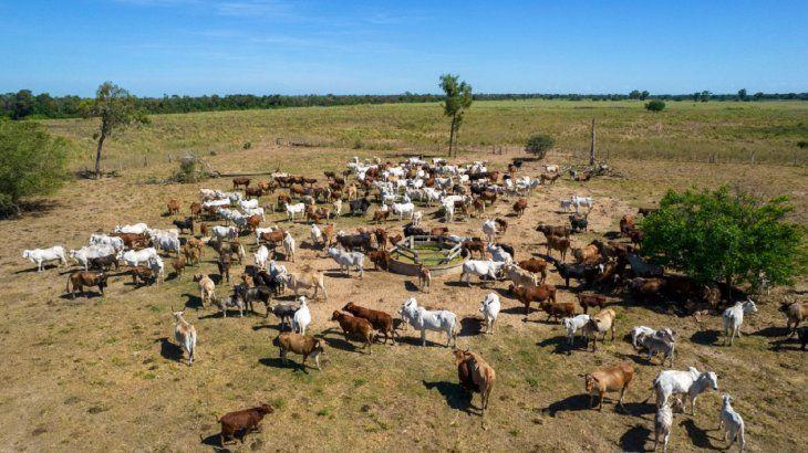 En Agua Dulce hay más de 400.000 cabezas de bovinos de exportación. Foto: Gianfranco Mancusi