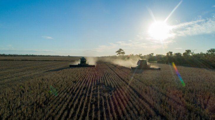 En cultivo de soja se extiende sobre 3.000 hectáreas y está arrojando buenos resultados de rendimiento. Foto: Gianfranco Mancusi